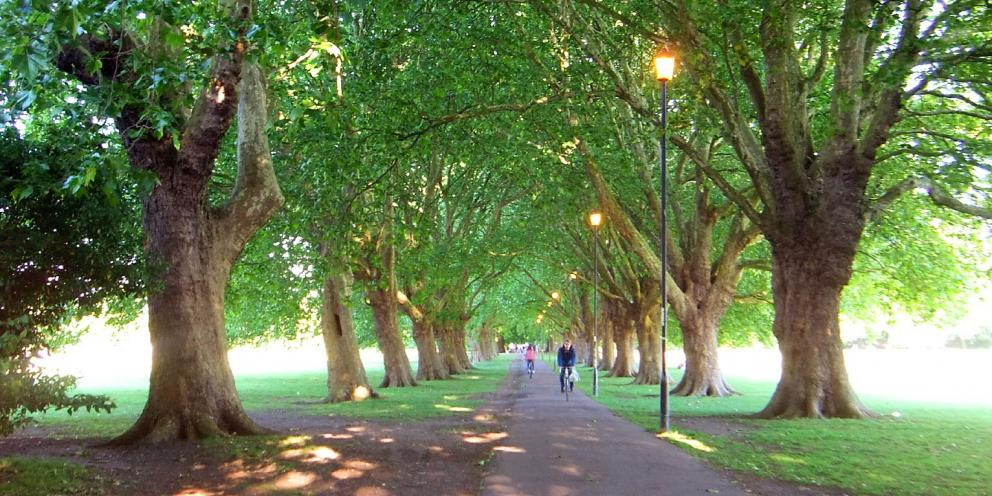Diamond Jubilee Trees