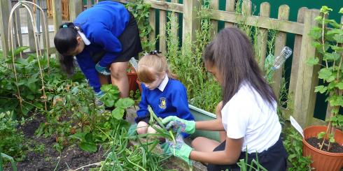 Food growing in schools