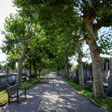 Tree-lined path between gravestones.